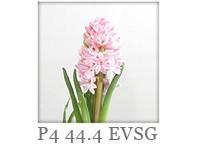 Drutex Glasarten - Verglasung - Sicherheitsglas - EVSG - P4 44.4 VSG Sicherheitsglas - Scheibe